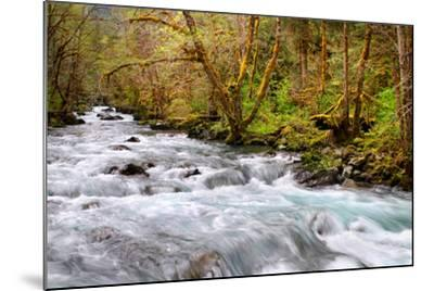 Rainforest River I-Douglas Taylor-Mounted Photo