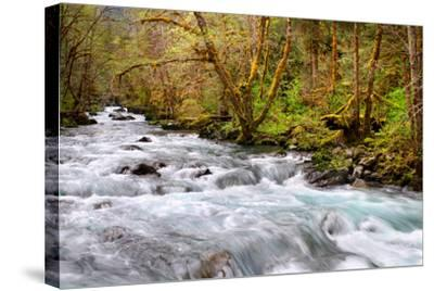 Rainforest River I-Douglas Taylor-Stretched Canvas Print