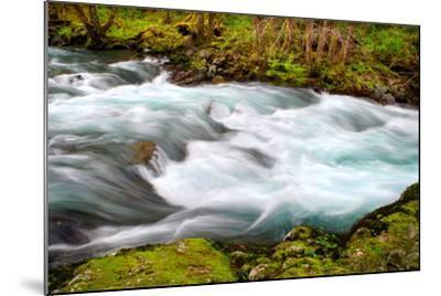 Rainforest River II-Douglas Taylor-Mounted Photo