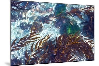 Mermaid Tresses I-Rita Crane-Mounted Photo