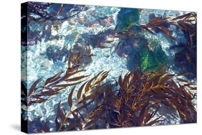 Mermaid Tresses I-Rita Crane-Stretched Canvas Print