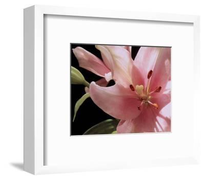 Pink Translucence III-Monika Burkhart-Framed Photo