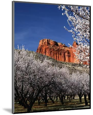 Capitol Reef-Ike Leahy-Mounted Photo