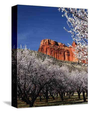 Capitol Reef-Ike Leahy-Stretched Canvas Print