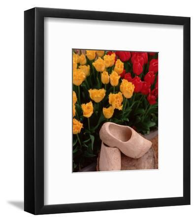 Wooden Shoe Tulips-Ike Leahy-Framed Photo