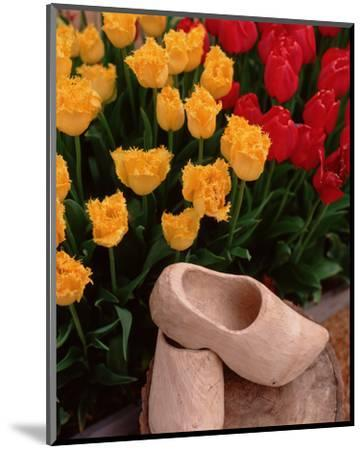 Wooden Shoe Tulips-Ike Leahy-Mounted Photo