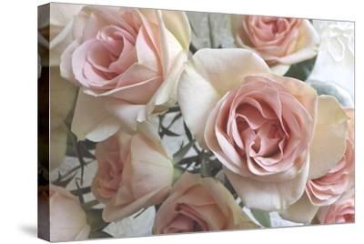 Summer Romance III-Monika Burkhart-Stretched Canvas Print