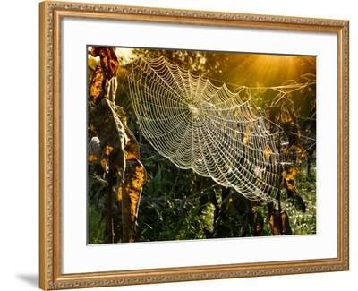 Strings of a Spider's Web in Back Light in Forest-Budimir Jevtic-Framed Photographic Print