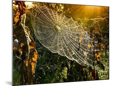 Strings of a Spider's Web in Back Light in Forest-Budimir Jevtic-Mounted Photographic Print