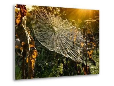Strings of a Spider's Web in Back Light in Forest-Budimir Jevtic-Metal Print
