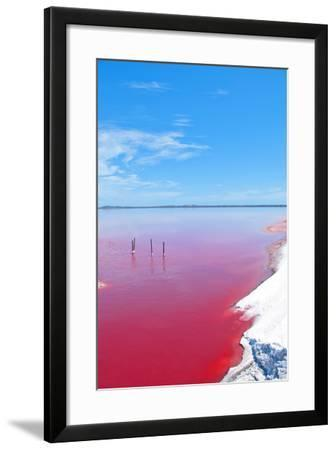 Pink Lake, Western Australia. this Lake Turns Pink in Summer Cause of an Algae with Red Pigments. T-Konrad Mostert-Framed Photographic Print