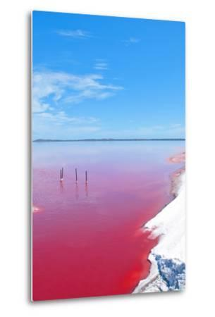 Pink Lake, Western Australia. this Lake Turns Pink in Summer Cause of an Algae with Red Pigments. T-Konrad Mostert-Metal Print