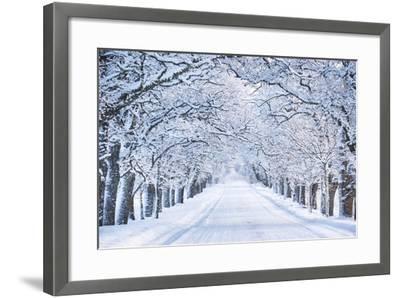Alley in Snowy Morning-Anna Grigorjeva-Framed Photographic Print