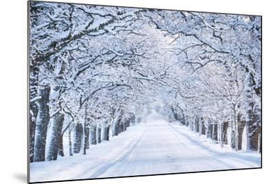 Alley in Snowy Morning-Anna Grigorjeva-Mounted Photographic Print