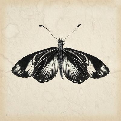 Butterfly Study VI-Melissa Wang-Framed Art Print