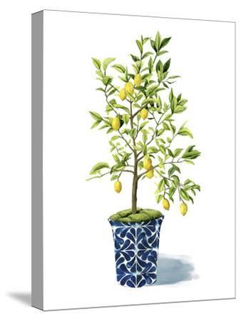 Fruit Tree II-Grace Popp-Stretched Canvas Print