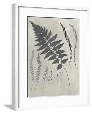 Vintage Fern Study II-Vision Studio-Framed Art Print