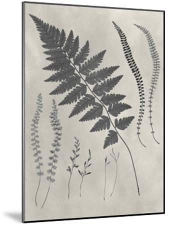 Vintage Fern Study II-Vision Studio-Mounted Art Print