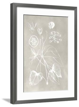 Botanical Schematic II-Vision Studio-Framed Art Print