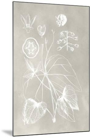 Botanical Schematic II-Vision Studio-Mounted Art Print