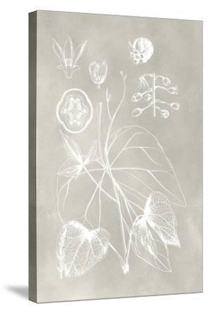 Botanical Schematic II-Vision Studio-Stretched Canvas Print