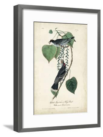 Flycatcher & King Bird-John James Audubon-Framed Art Print