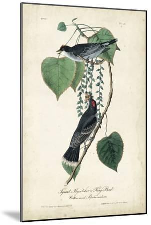 Flycatcher & King Bird-John James Audubon-Mounted Art Print