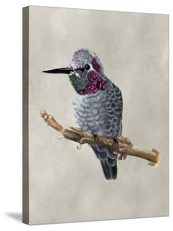 Winged Beauty IV-Naomi McCavitt-Stretched Canvas Print