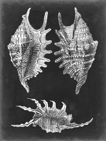 Alabaster Shells V-Vision Studio-Framed Art Print