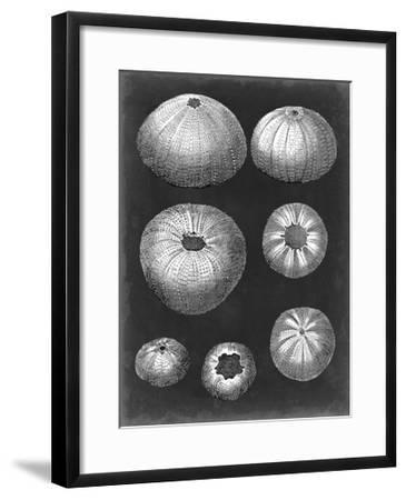 Alabaster Shells IV-Vision Studio-Framed Art Print