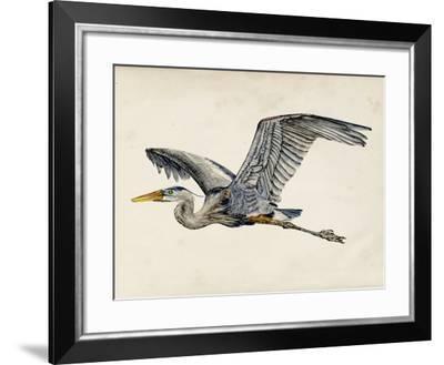 Blue Heron Rendering III-Melissa Wang-Framed Art Print