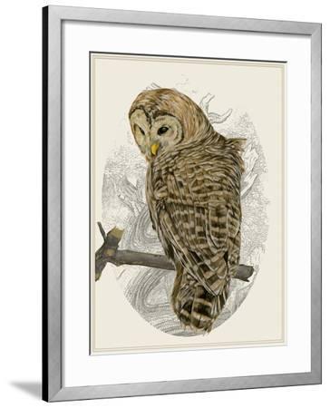 Barred Owl II-Melissa Wang-Framed Art Print