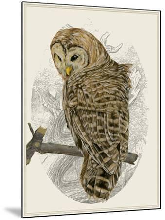 Barred Owl II-Melissa Wang-Mounted Art Print