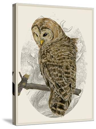 Barred Owl II-Melissa Wang-Stretched Canvas Print