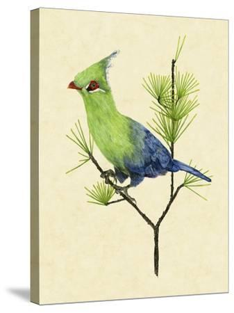 Green Turaco II-Melissa Wang-Stretched Canvas Print