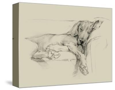 Dog Days I-Ethan Harper-Stretched Canvas Print