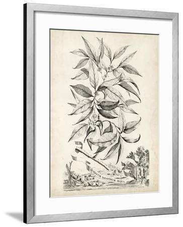 Scenic Botanical IV-Abraham Munting-Framed Art Print