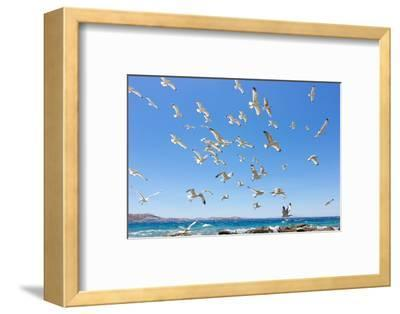 Swarm of Sea Gulls Flying close to the Beach of Mykonos Island,Greece-smoxx-Framed Photographic Print