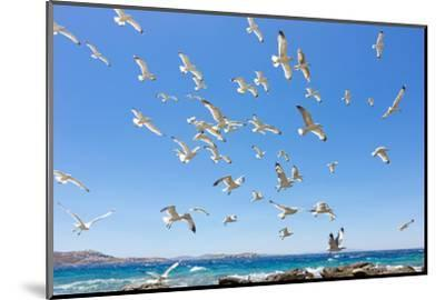 Swarm of Sea Gulls Flying close to the Beach of Mykonos Island,Greece-smoxx-Mounted Photographic Print