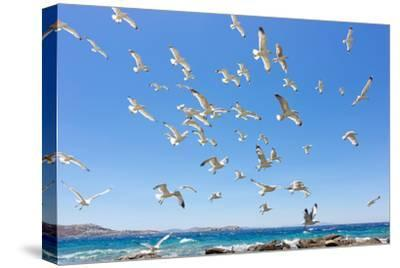 Swarm of Sea Gulls Flying close to the Beach of Mykonos Island,Greece-smoxx-Stretched Canvas Print