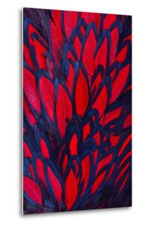 Beautiful Abstract Background Consisting of Red Hen Saddle Feathers-Keith Publicover-Metal Print