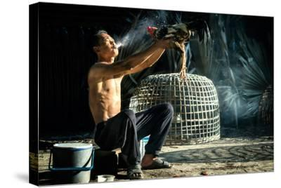 Man Cleaning Thai Gamecock- SantiPhotoSS-Stretched Canvas Print