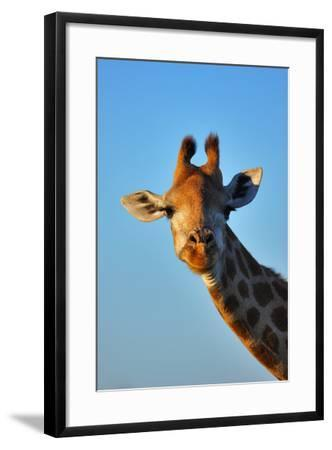 Close-Up Portrait of a Giraffe ; Giraffa Camelopardalis-Johan Swanepoel-Framed Photographic Print