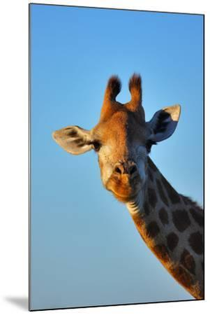 Close-Up Portrait of a Giraffe ; Giraffa Camelopardalis-Johan Swanepoel-Mounted Photographic Print