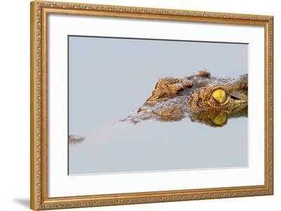 Close-Up of a Nile Crocodile with Reflection in Water ( Crocodylus Niloticus )-Johan Swanepoel-Framed Photographic Print