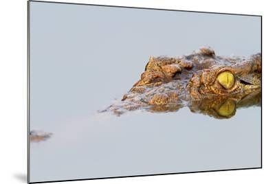 Close-Up of a Nile Crocodile with Reflection in Water ( Crocodylus Niloticus )-Johan Swanepoel-Mounted Photographic Print