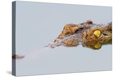 Close-Up of a Nile Crocodile with Reflection in Water ( Crocodylus Niloticus )-Johan Swanepoel-Stretched Canvas Print