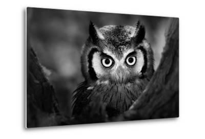 Close-Up of a Whitefaced Owl (Artistic Processing)-Johan Swanepoel-Metal Print