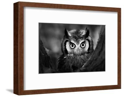 Close-Up of a Whitefaced Owl (Artistic Processing)-Johan Swanepoel-Framed Photographic Print