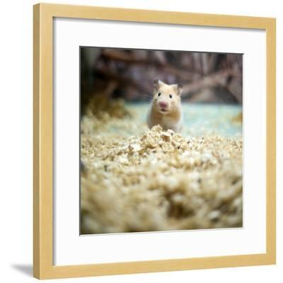 Cute Hamster- LIUSHENGFILM-Framed Photographic Print